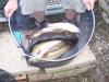 bewdley-in-july-2009-256